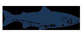Urlaubsangebote am Tegernsee angeln